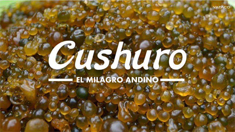 CUSHURO tiene más calcio que la leche y más hierro que la lenteja